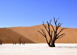 min_tree_desert_namib