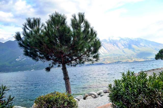 www.tripelonia.com - Limone sul Garda April 2016 (82)