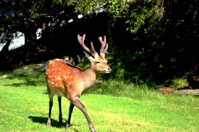 www-tripelonia-com-merlet-park-animalier-2016-171