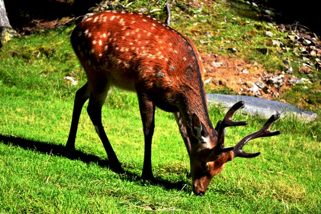 www-tripelonia-com-merlet-park-animalier-2016-191
