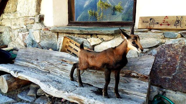 www-tripelonia-com-merlet-park-animalier-2016-41