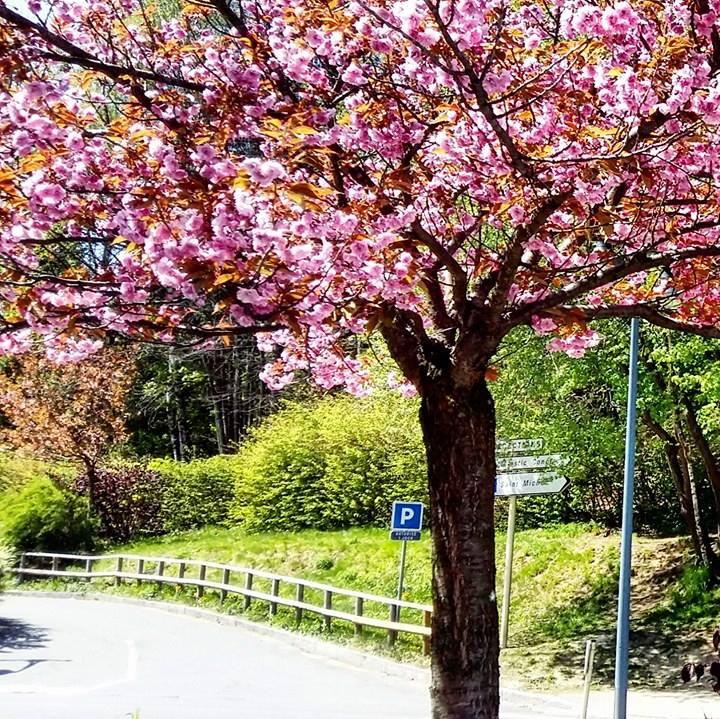 www.tripelonia.com - Spring blossoms (1)