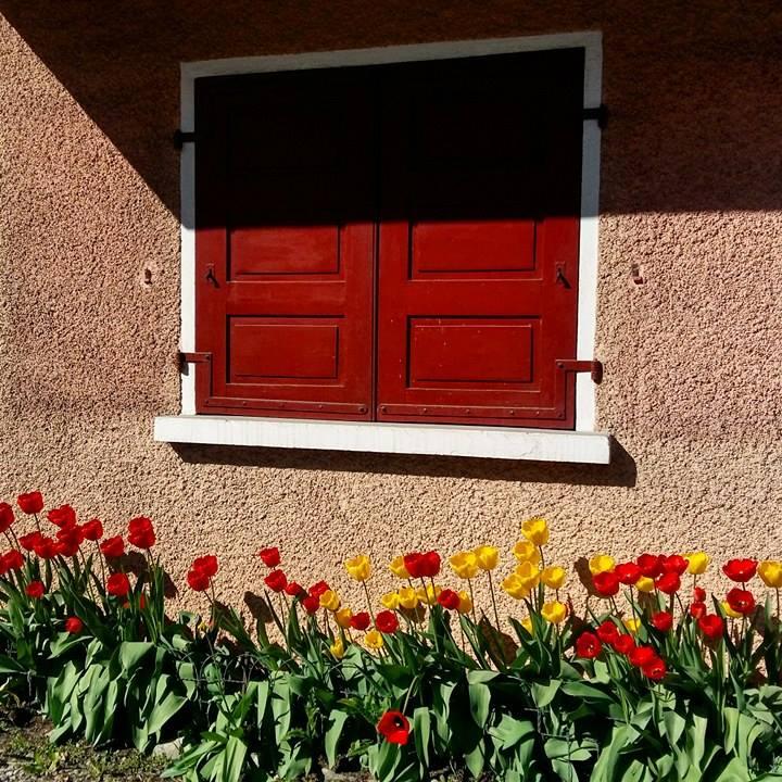 www.tripelonia.com - Spring blossoms (10)