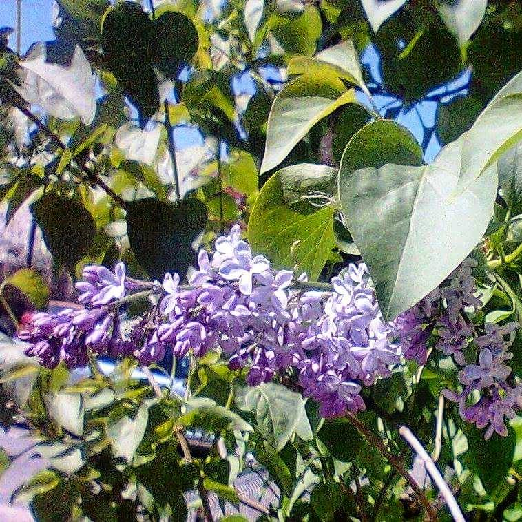 www.tripelonia.com - Spring blossoms (11)