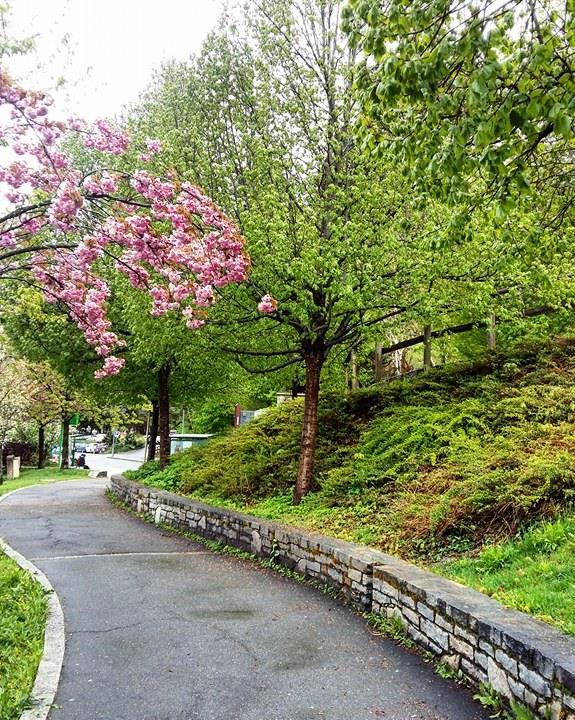 www.tripelonia.com - Spring blossoms (12)