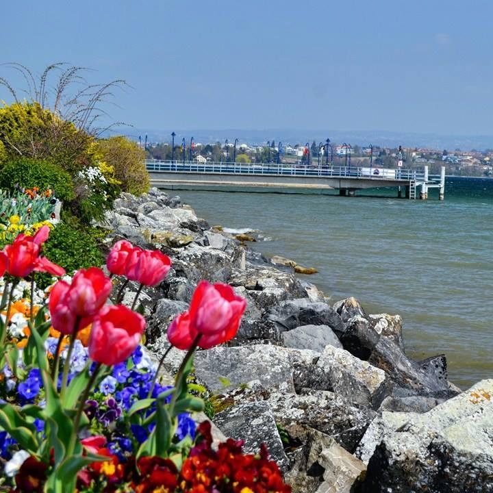 www.tripelonia.com - Spring blossoms (13)