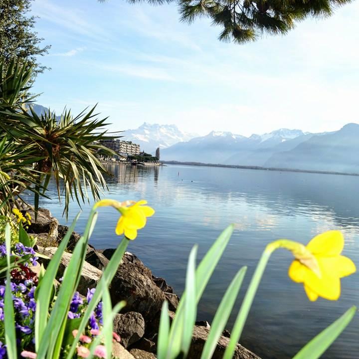 www.tripelonia.com - Spring blossoms (15)