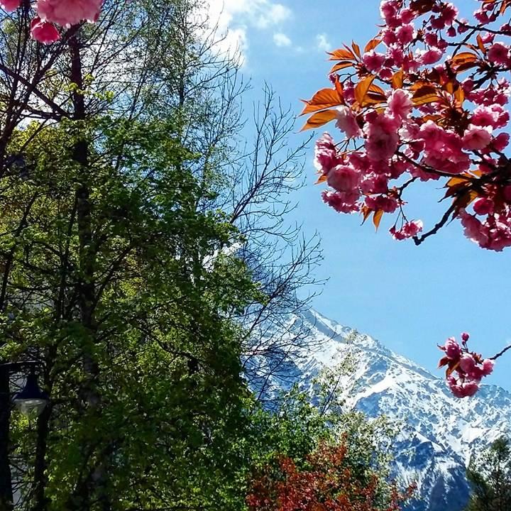 www.tripelonia.com - Spring blossoms (16)