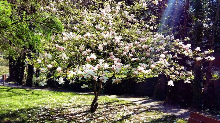 www.tripelonia.com - Spring blossoms (17)