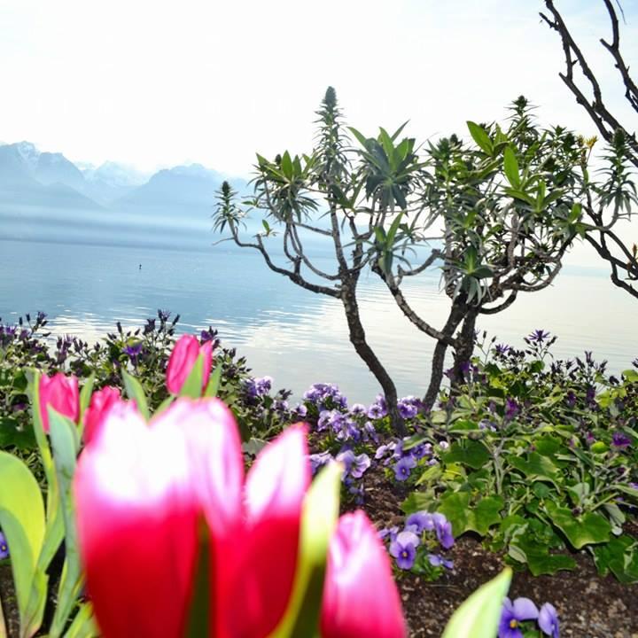 www.tripelonia.com - Spring blossoms (18)