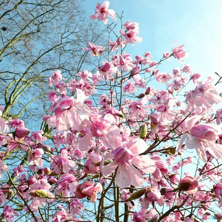 www.tripelonia.com - Spring blossoms (19)