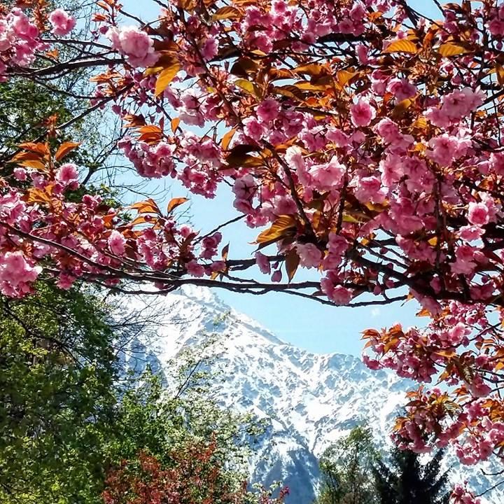 www.tripelonia.com - Spring blossoms (22)