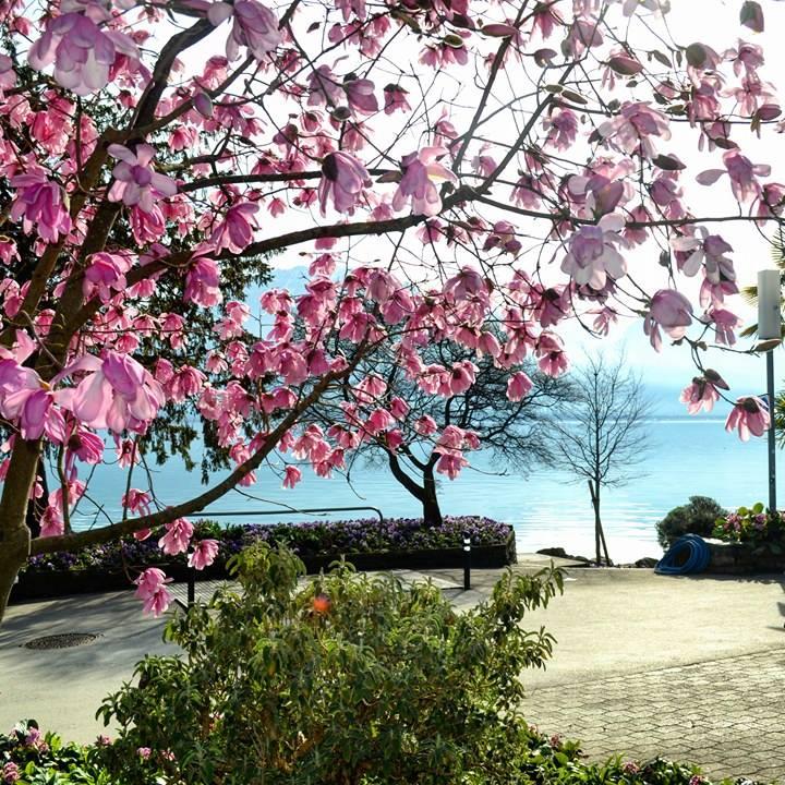 www.tripelonia.com - Spring blossoms (23)