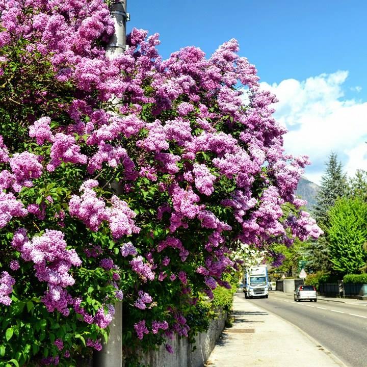www.tripelonia.com - Spring blossoms (24)