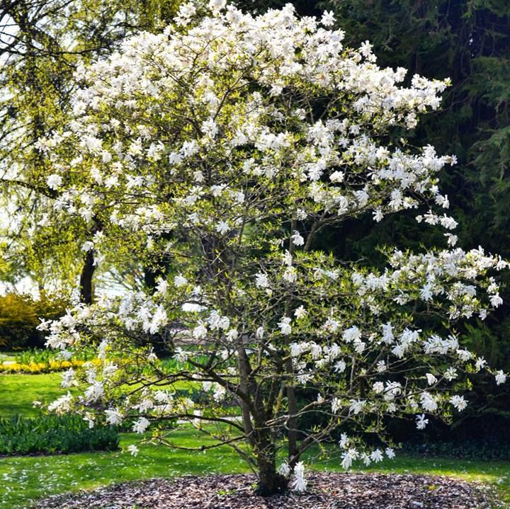 www.tripelonia.com - Spring blossoms (25)