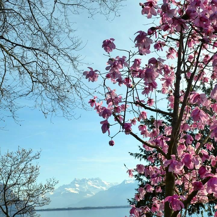 www.tripelonia.com - Spring blossoms (3)