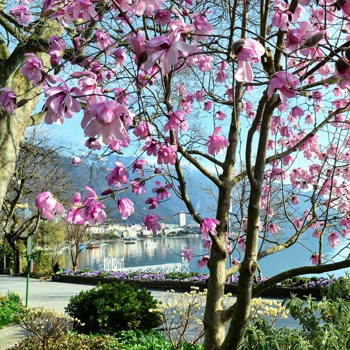 www.tripelonia.com - Spring blossoms (4)