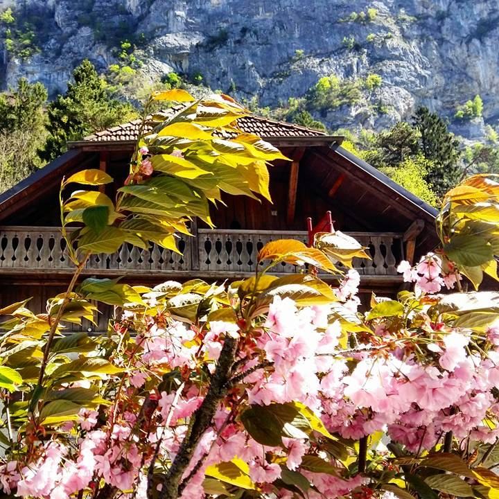 www.tripelonia.com - Spring blossoms (8)