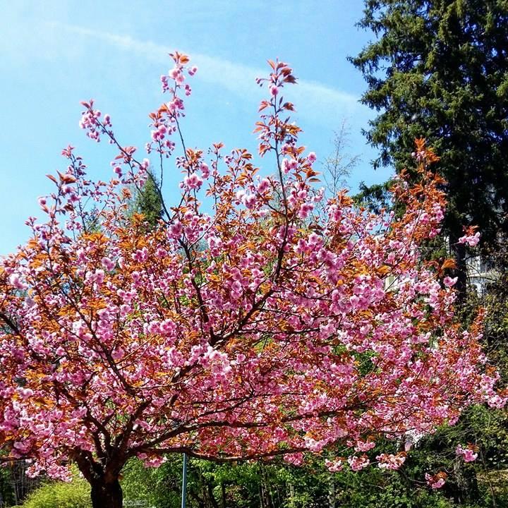 www.tripelonia.com - Spring blossoms (9)