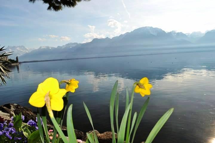 www.tripelonia.com - Montreux Riviera 2017 (1)