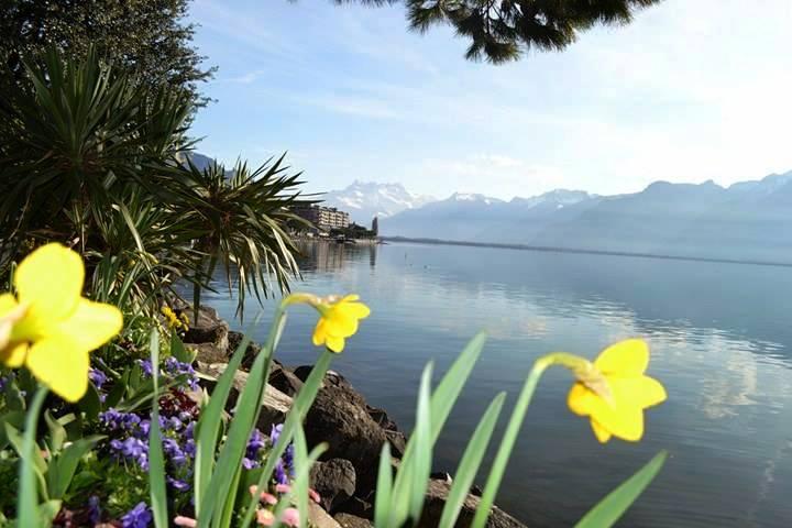www.tripelonia.com - Montreux Riviera 2017 (23)