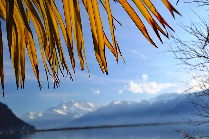 www.tripelonia.com - Montreux Riviera 2017 (9)