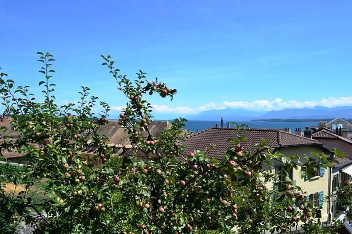 www.tripelonia.com - Nyon Switzerland (13)