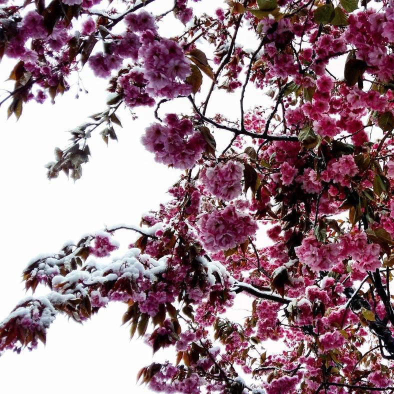 www,tripelonia.com - May 1 (9)
