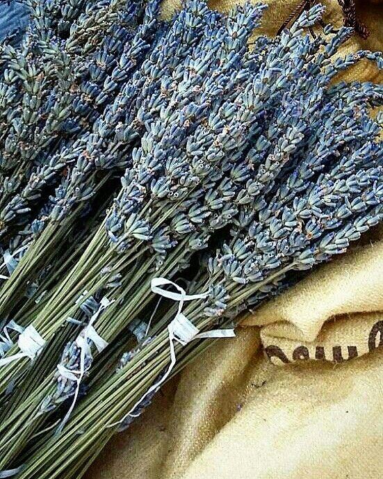www.tripelonia.com lavender 03